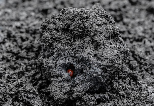A ladybug finds home in the porous rock